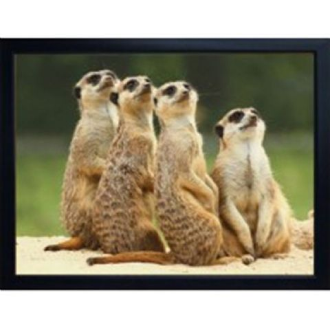 MEERKAT 3D FRIDGE MAGNET